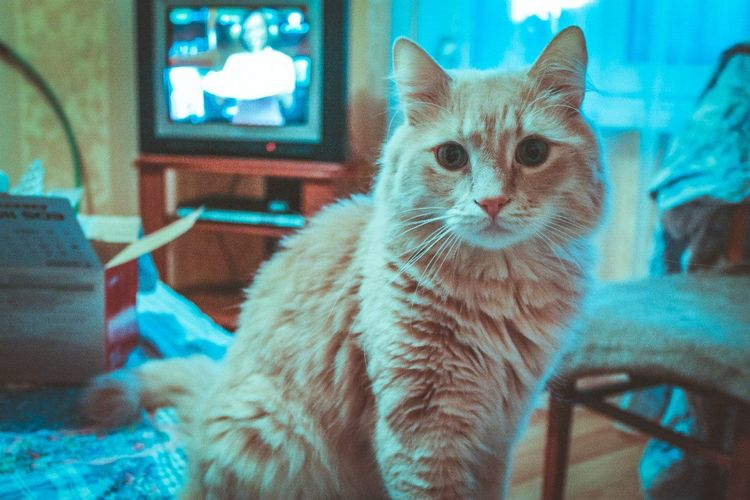 Кэтсвил tst Cute Pets Cat Catstagram Catcatcat