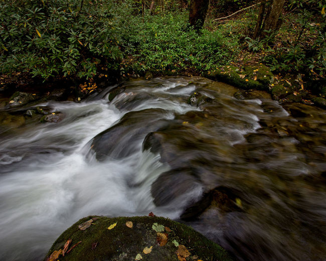 Rushing Cascade Nature Plant Blurred Motion No People Long Exposure Rock - Object Day Beauty In Nature Rock Motion Forest Flowing Water Scenics - Nature Tree Outdoors Environment Flowing Stream - Flowing Water Power In Nature