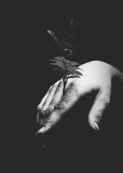Hand Woodlove Blackandwhite