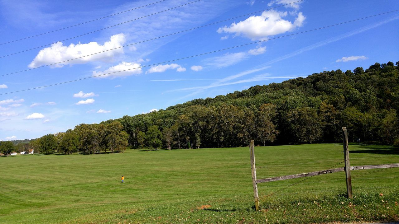 sky, tree, grass, nature, field, green color, growth, no people, landscape, outdoors, beauty in nature, day