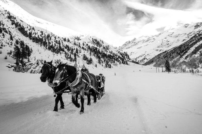 A new year is passed by Winter Wonderland Winter Fujifilm FUJIFILM X-T1 Travel Destinations Travel Photography Traveling Blackandwhite Photography Landscape_Collection Landscape Photography Blackandwhite Christmastime New Year EyeEm Selects Snow Mountain Cold Temperature Winter Sky Horse Cart Wagon Wheel Carriage Horse