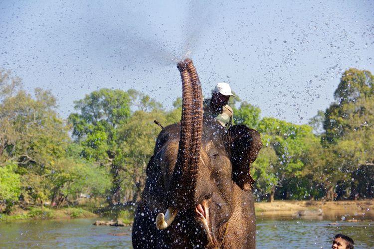 Elephant splashing water on tourist