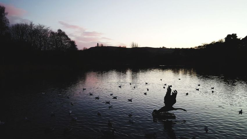 Geese Duck Pond Newtownards Tim Bailie Outdoors Northern Ireland Phone Photography Co Down Sky Reflection Silhouette Lake Nature Water