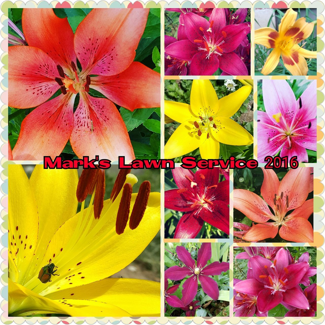 flower, fragility, petal, freshness, flower head, close-up, yellow, collage, no people, beauty in nature, multi colored, day, nature, blooming, outdoors
