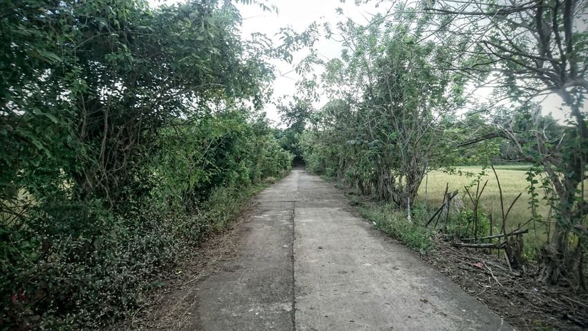 Trail to the hinterlands Tree Growth The Way Forward