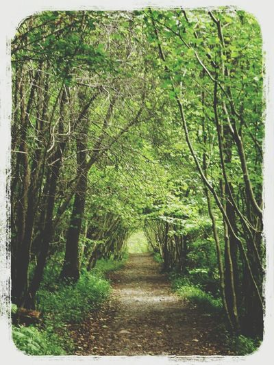 natural tunnel Walking Around Nature EyeEm Nature Lover
