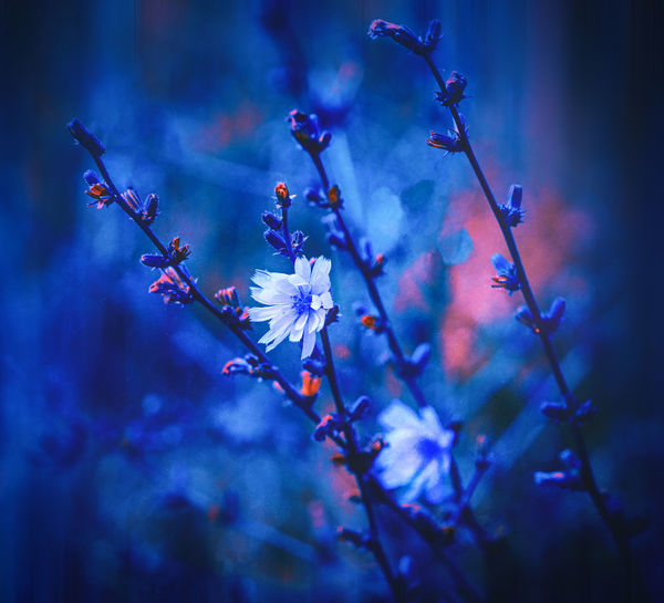 Blue, blue, blue .... ArtWork Blue Color Dream Dreaming Plant Beauty In Nature Blossom Blossoms  Blue Botany Branch Close Up Close-up Day Dreamy Fantasy Flower Flower Head Fragility Freshness Growth Macro Nature Near No People Outdoors Petal Plum Blossom Selective Focus Springtime Stamen Tree Twig