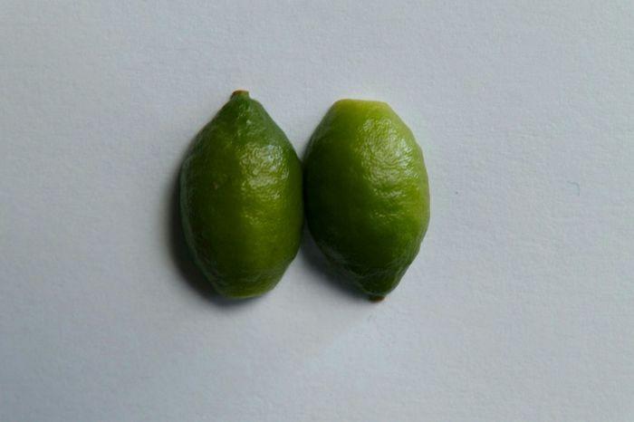 Green Lemon Fruit Whitebackground Cutinhalf