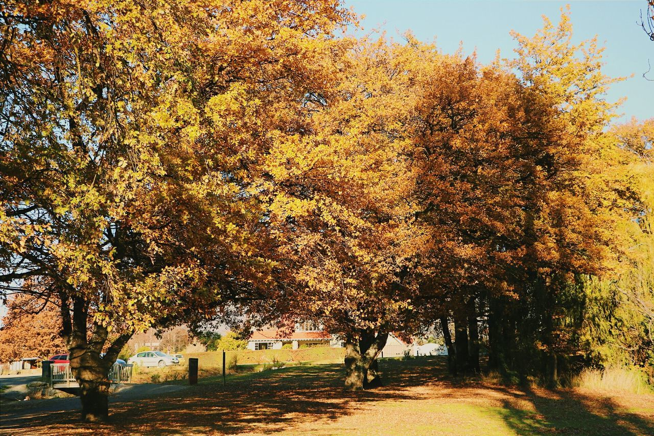 autumn, tree, change, nature, leaf, beauty in nature, growth, no people, outdoors, tranquility, day