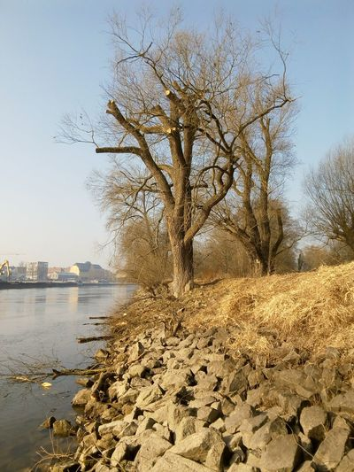 Seilklettertechnik Baumpflege Baumstamm Outdoors Nature Tree Flussufer Bqaquaris Bq