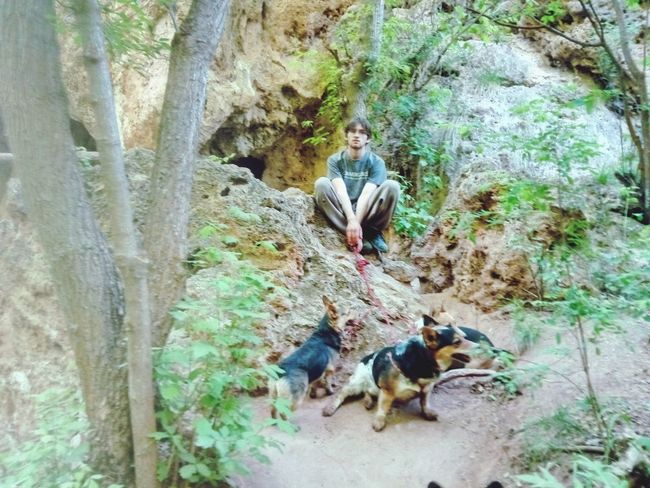 Pembroke Welsh Corgi Landscape person Hiking Puppy Dogs Tree Full Length Reptile Iguana