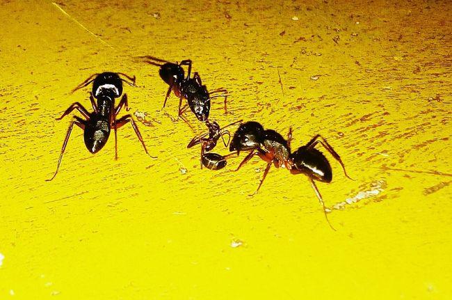 Close-up Animal Themes Ants Ants At Work Ants Close Up Ants In Motion Black Ants EyeEmNewHere Live For The Story Paint The Town Yellow