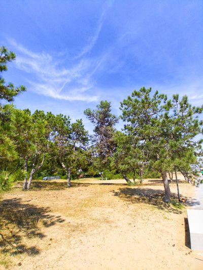 Tree Sand Beach Palm Tree Sky Idyllic Scenics