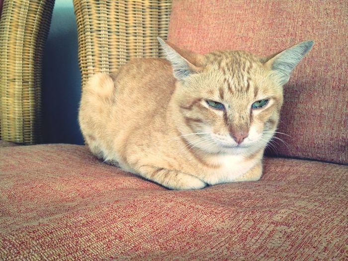 Mr.Garfield the cat