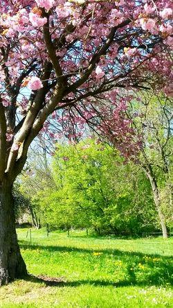 Frühling, Spring