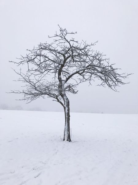 Lonely tree in a winterwonderland Winter Cold Temperature Snow Nature Bare Tree Tree Weather Tranquility Beauty In Nature Tranquil Scene Branch Day No People Lone Scenics Outdoors Isolated Sky Landscape