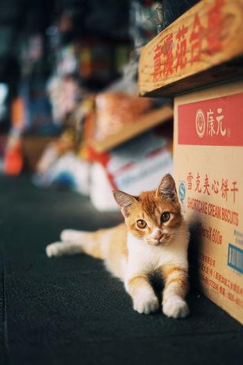 EyeEm Selects Pets Looking At Camera Outdoors Kitten Cute Animal Themes