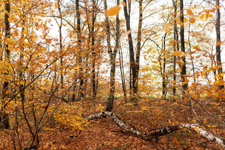 Tree Autumn Change Plant Forest Land Nature Tranquility Beauty In Nature Day Orange Color No People Tranquil Scene Scenics - Nature Plant Part Outdoors Tree Trunk WoodLand Leaf Trunk Autumn Collection Fall