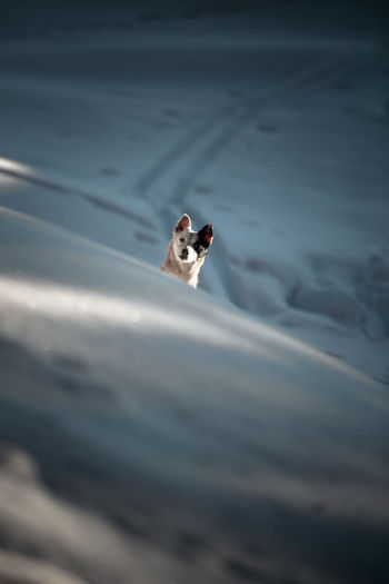 One Animal Animal Themes Animal Mammal Vertebrate Domestic Animals Pets Domestic No People Dog Canine Day Animals In The Wild Animal Wildlife Selective Focus High Angle View Nature Bird Looking Portrait Small Animal Head  Winter Snow Mountain