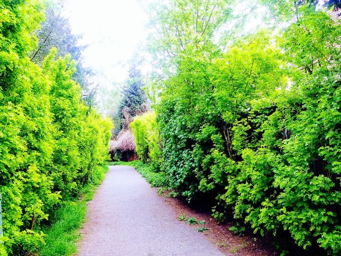 path in Rixdorf -Neukölln Growth Green Color Nature Green Beauty In Nature Outdoors Path In Rixdorf Nature In Neukölln Outdoors In Neukölln