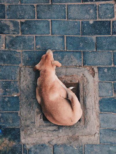 Dog sleeping against brick wall