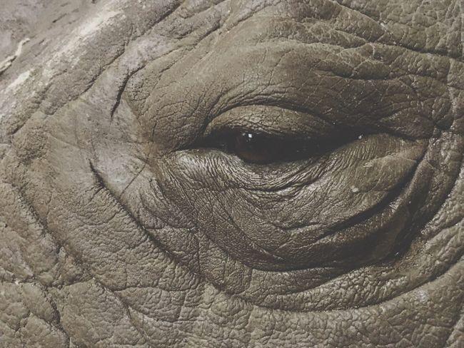 Rhino eye. Rhino Eye Eyes Animals Animal Wildlife Nature Beautiful Africa African Beauty Savannah