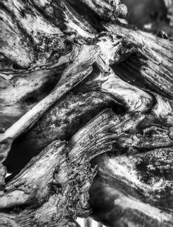 Abstract Nature Textured  Tree Trunk Close-up Nature Backgrounds Outdoors Knotted Wood Shapes And Patterns  Layers And Textures Shapes In Nature  Natural Collages Beauty In Nature Driftwood Abstractions Patterns In Nature Natural Condition Dead Tree Tree Perspective View Weathered Shapes And Forms Black And White Wood - Material