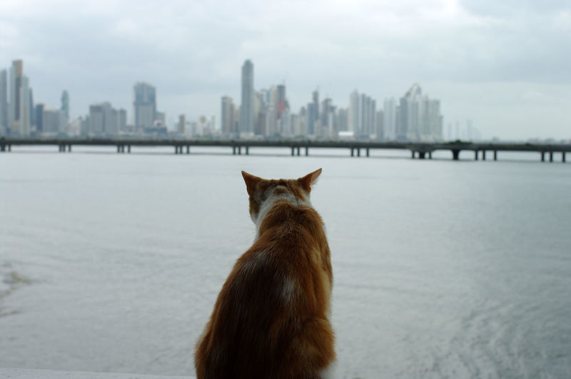 View of an animal in city
