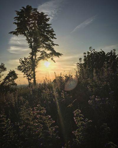 Nature Germany Franken Franconia Sunset Sky No People Sun Weroamgermany Momentkeepers Idyllic Moody Captures Landscape IPhoneography