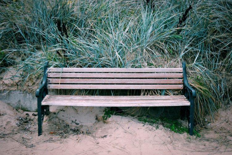 Empty Bench On Landscape