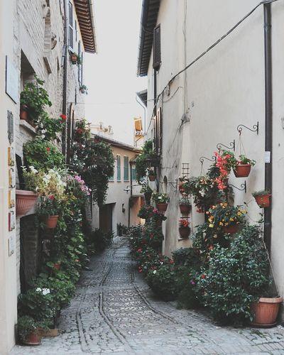 Spello Umbria Italy Infiorata Taking Photos Hanging Out Beauty Summer Holiday Enjoying Life Open Edit Igersumbria