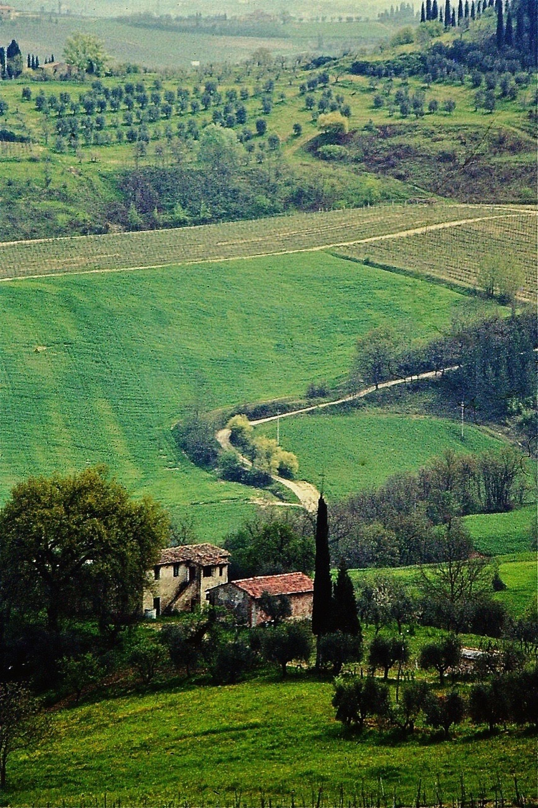 house, landscape, architecture, green color, built structure, agriculture, farm, building exterior, grass, high angle view, field, tree, rural scene, residential structure, tranquil scene, tranquility, solitude, countryside, scenics, village, cultivated land, crop, plant, nature, beauty in nature, remote, green, outdoors, non-urban scene, day, growth, agricultural