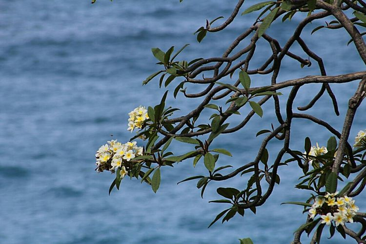 Nature Tenerife. Canary Islands Plant Sea
