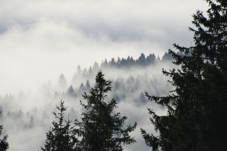 Nebel über dem