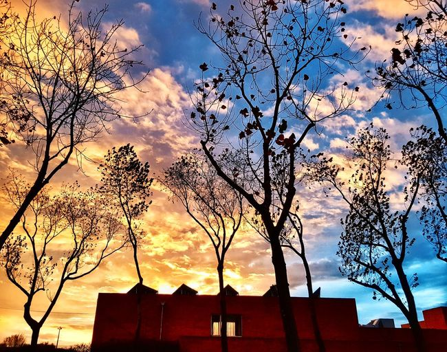 missing second home Trees Colours University Student Day Sunset Sunset_collection Sillouette Amazing Aveiro Cityscape Phonecamera PhonePhotography Samsung Galaxy S8 Built Structure Architecture Sky Silhouette Building Exterior Cloud - Sky No People Outdoors Day Nature