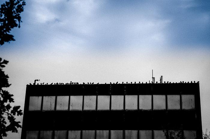 Birds Birds Of EyeEm  Birds_collection Building Exterior Building Roof Building Story Scenery Sky Windows