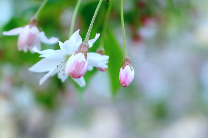 Flower Nature Growth Freshness Petal Beauty In Nature Plant Pink Color Blossom No People Close-up Fragility Springtime Flower Head Day Outdoors EyeEm Gallery EyeEm Best Shots