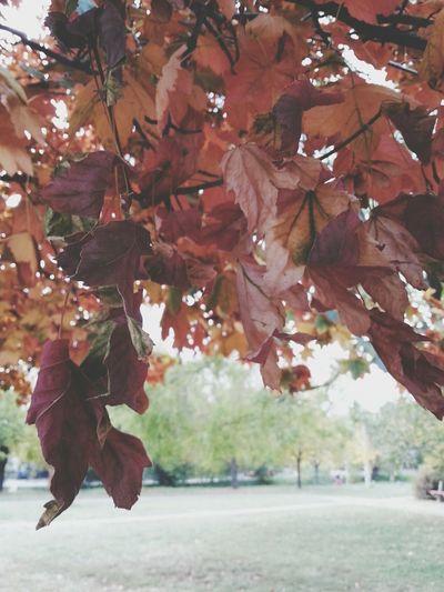 fall Autumn Leafs Colorful
