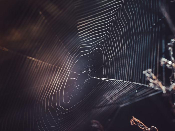 Empty spider