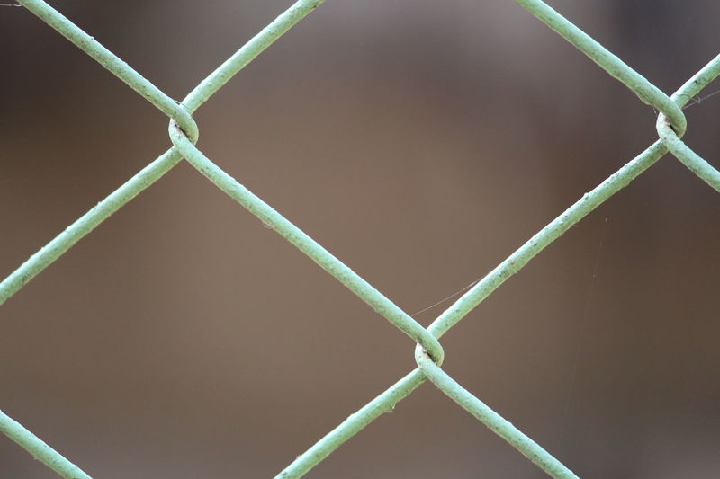 Green Color Close-up No People Backgrounds Outdoors Day Nature Cage Fences & Beyond Captive Wire Mesh Fence Black And Green Be Free Free Animals Free Animals From Zoo Freedom Web Spiderweb