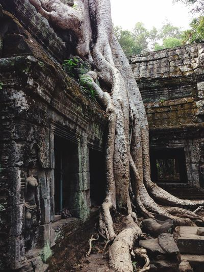 Majestical Impressive Nature Cambodia Angkor Wat Architecture Built Structure No People Building Exterior Tree