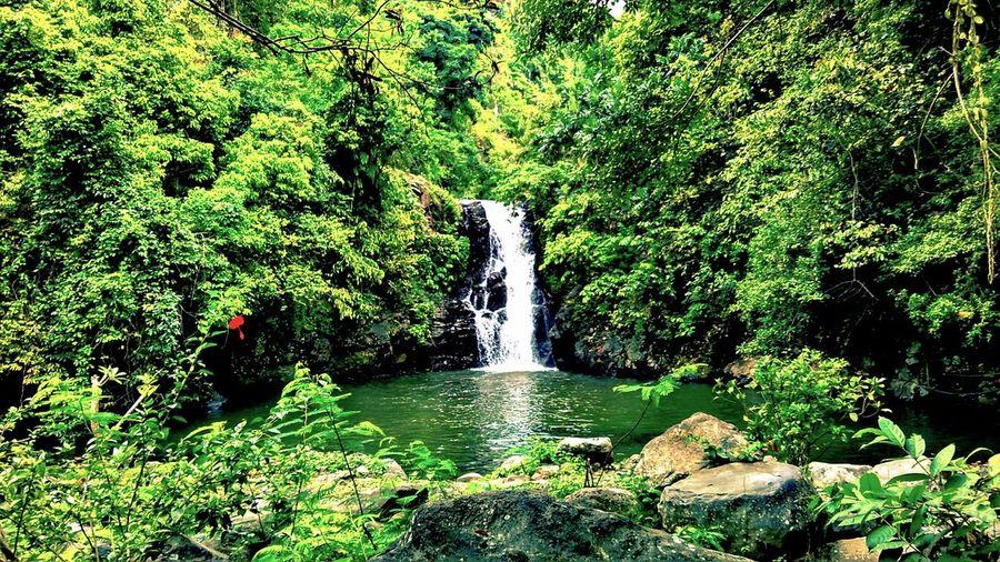 One of secret garden in Bali Secret Garden Landscape Nature Photography Waterfall Bali INDONESIA