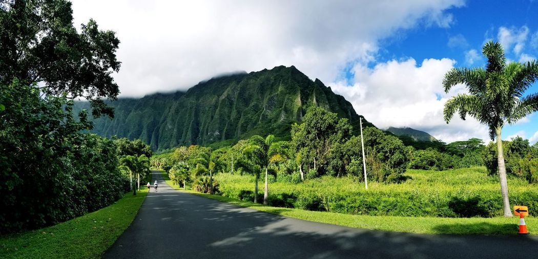 Another day in paradise! 🌈😙🌞⛰ Hawaii Paradise Serenity Love #Nature  #photography Travel Destinations Travel #landscape #nature #photography Cloud - Sky Tree Green Color Sky Growth Nature Beauty In Nature Outdoors Day Freshness Scenics
