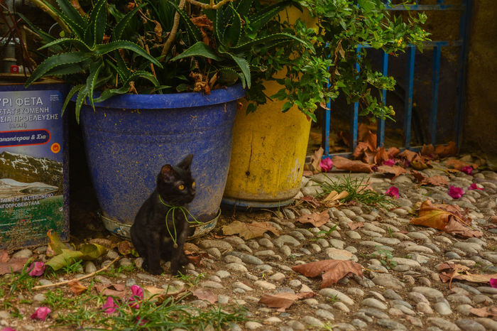 Animal Themes Black Cat Black Cat Photography Black Kitten Day Domestic Animals Greek Cat Indoors  Kitten Leaf Nature No People Object One Animal Pets Plant