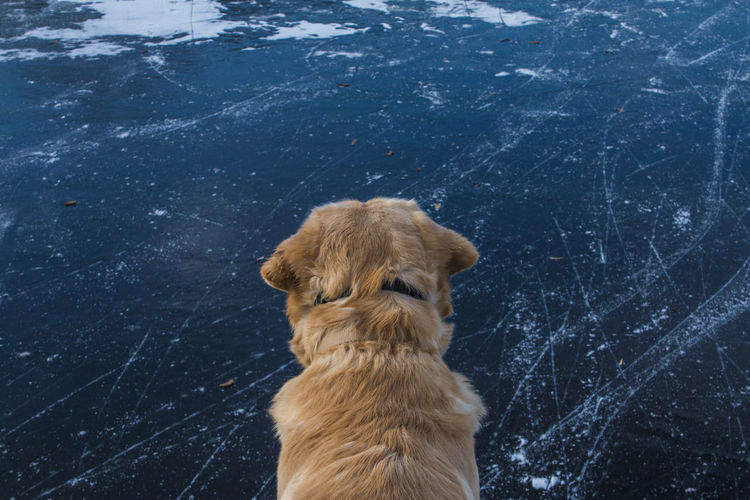 Blue Cold Days Cold Temperature Dog Dog Love Dog On The Ice Dogs Dogs Of EyeEm Ice Nature No People One Animal Outdoors Pets Portrait Snow Water Winter