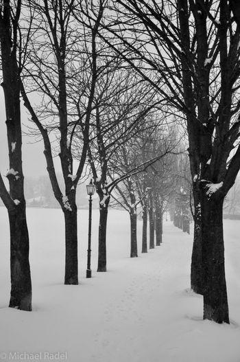Winterwonderland Wintertime Winter Snow