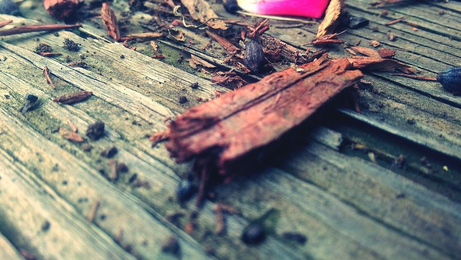 Wood Taking Photos Relaxing Hanging Out Color Closeup Cool Abstract New Pic  Picture Colorful Beauty Beautiful Follow World