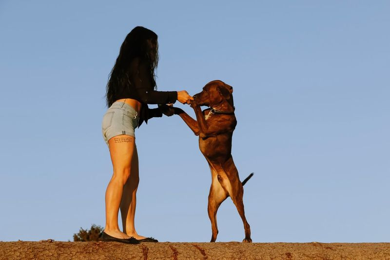Woman playing with dog against clear blue sky
