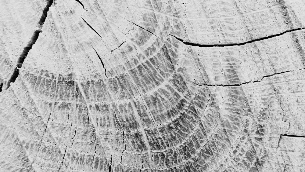Tree Ring Full Frame Close-up Log Nature Backgrounds Tree Trunk Tree Wood - Material Timber Concentric Deforestation No People Savetherainforests Savethetrees Savethenature Abstract Photography Abstract Nature Textured  Macro Nature Black And White Collection  Macro_collection Macro Beauty Macro Photography Abstractions In BlackandWhite