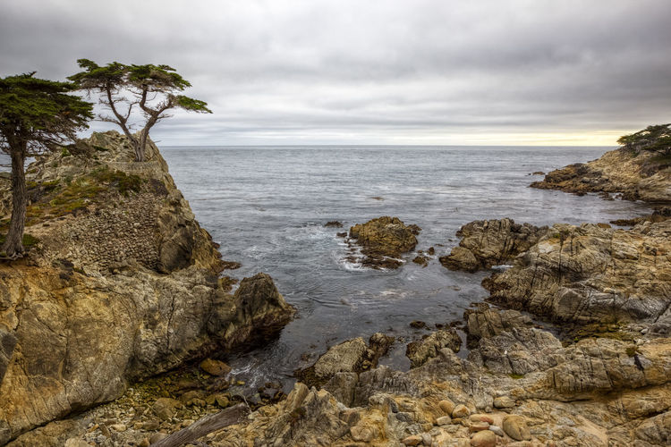Lone Cypress Tree Water Sky Rock Sea Cloud - Sky Rock - Object Beauty In Nature Solid Nature Scenics - Nature Tranquil Scene Horizon Horizon Over Water Tranquility Land Tree No People Beach Plant Outdoors Rocky Coastline Lone Cypress Pacific Ocean Cove Overcast